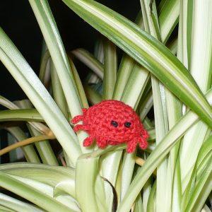 Crandall the Cranky Crab